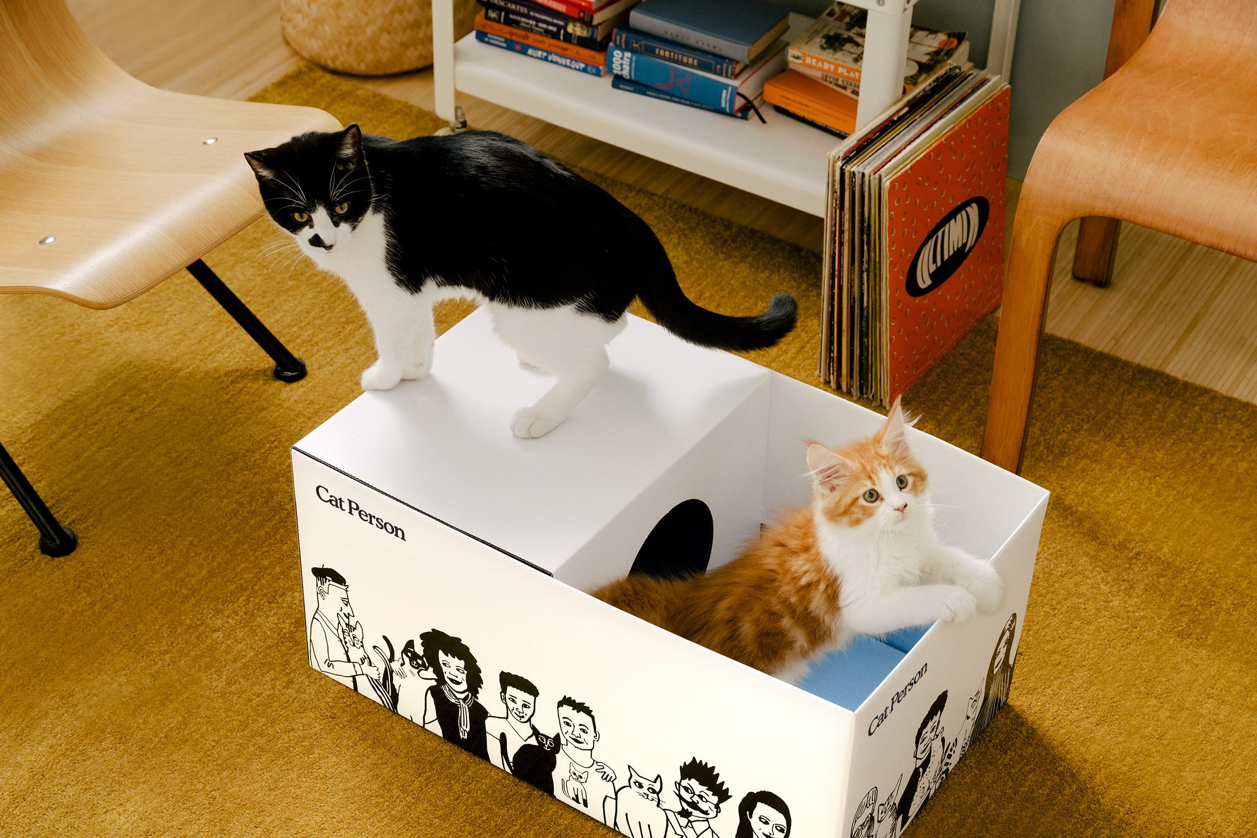 19_11_05-Cat-Person_CAT-BOX_198